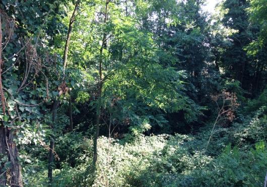 boscaglia tdq