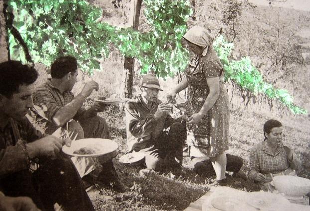 All'ombra delle viti 1950